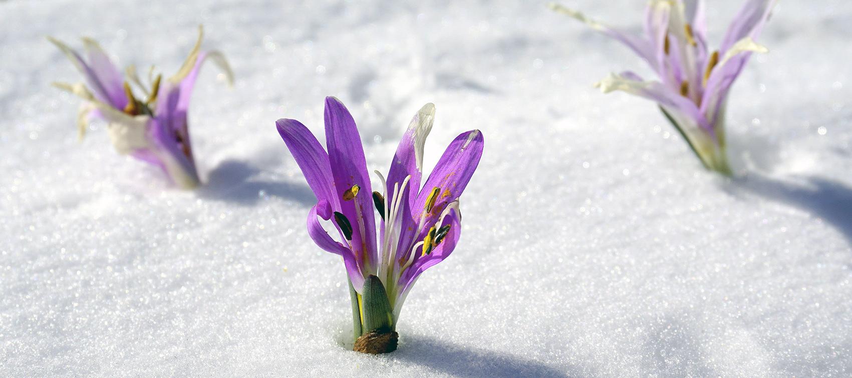 nieuwsbrief winter 3